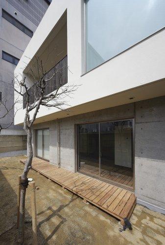 京都市S邸庭からの見上げ